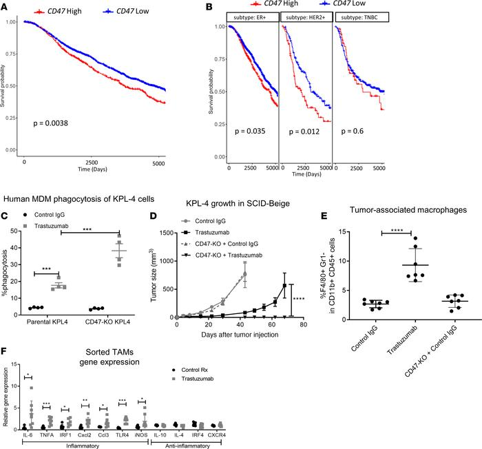 Human CD47 gene expression is a prognostic factor in HER2+ breast cancer...