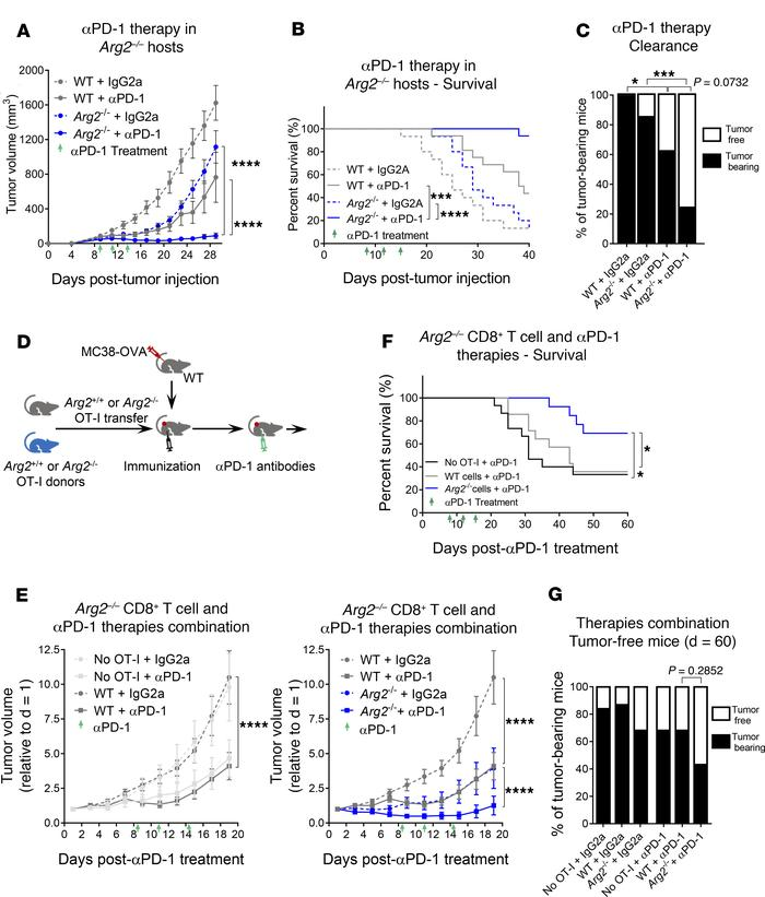 Tumor growth is inhibited synergistically by PD-1 blockade and either ge...