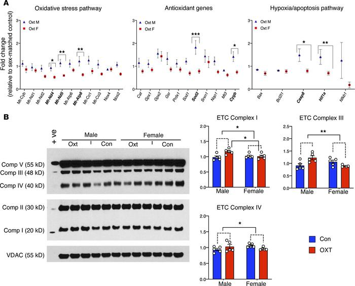 OXT-induced hypercontractility causes sex-dependent gene expression chan...