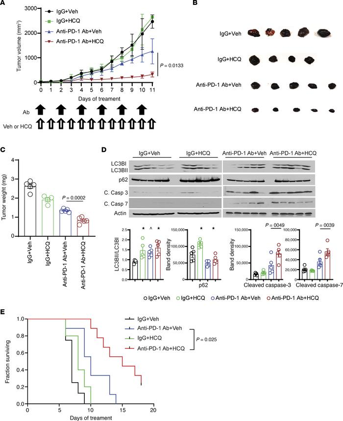 PPT1 inhibitor HCQ enhanced the antitumor efficacy of anti–PD-1 Ab in a ...