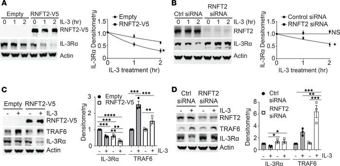 RNFT2 regulates IL-3Rα protein levels and IL-3Rα–dependent inflammatory ...