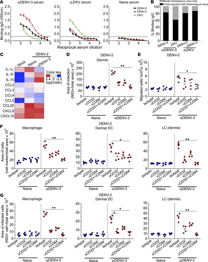 Cross-reactive antibodies in immune sera mediate enhancement through CD3...