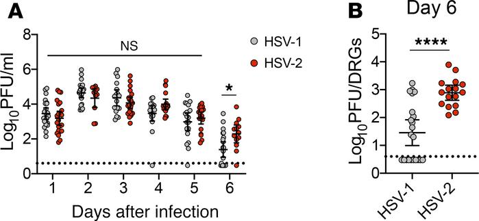 Vaginal HSV-1 infection leads to lower viral burden in the dorsal root g...