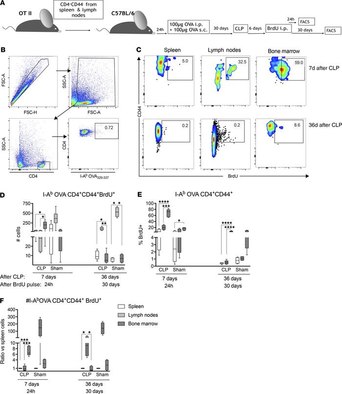 BM supports proliferation of specific Ag-experienced memory CD4+ T cells...