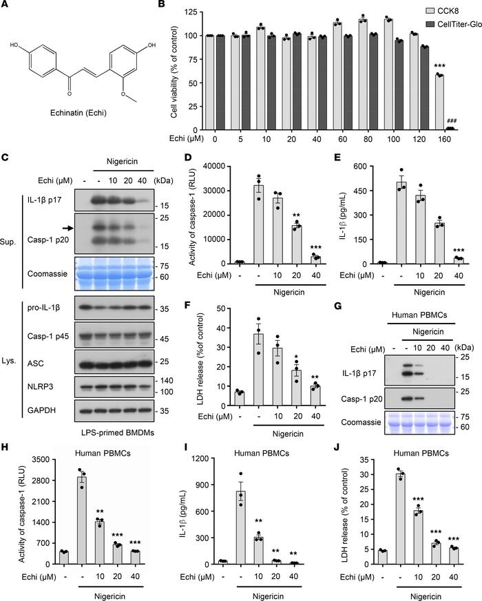 Echinatin inhibits NLRP3 inflammasome activation in mouse BMDMs and huma...