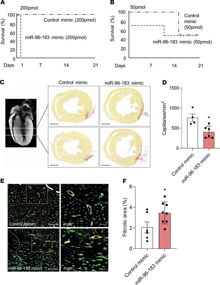 Mimic-mediated overexpression of miR-96 and miR-183 prevents scar tissue...