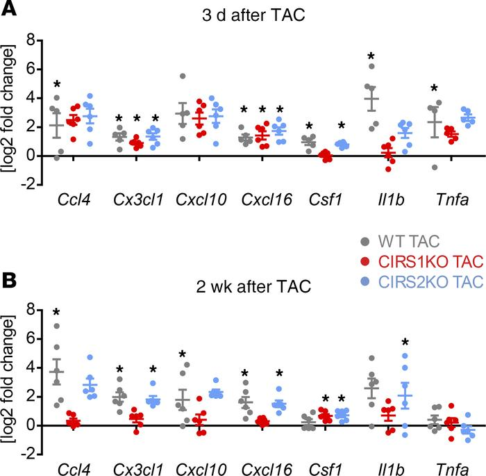 Attenuation of inflammatory regulators in CIRS1KO hearts after TAC. (A a...