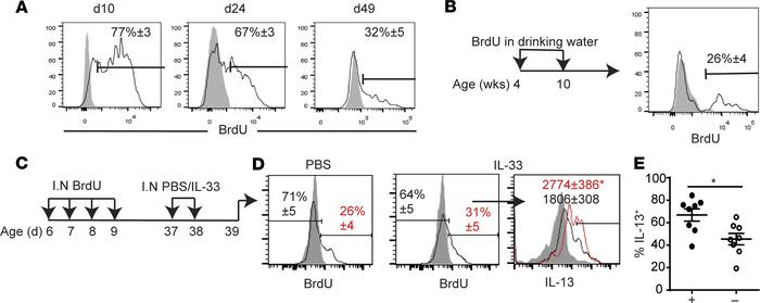 ILC2s labeled with BrdU in the neonatal period respond more intensely th...