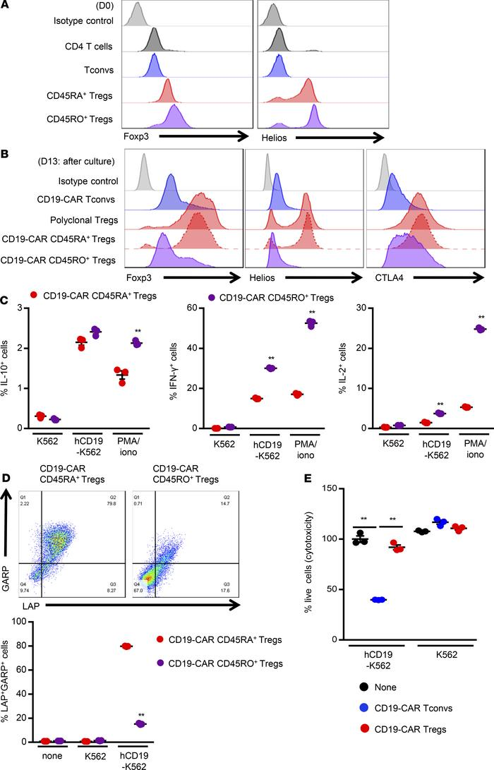 CD19-targeted CAR Tregs maintain the phenotype and suppressive abilities...