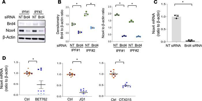 Brd4 inhibition downregulates Nox4 expression in IPF lung fibroblasts. (...