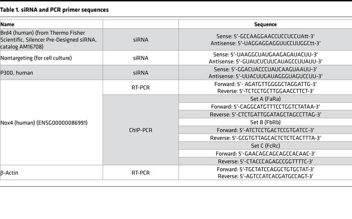 siRNA and PCR primer sequences