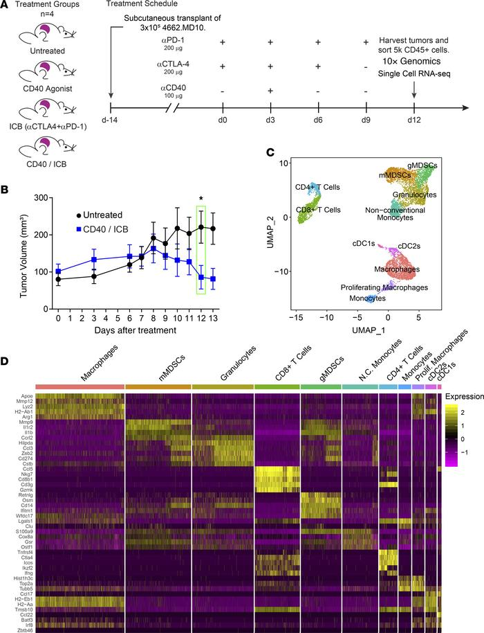 Single-cell RNA-sequencing identifies intratumor immune populations. (A)...