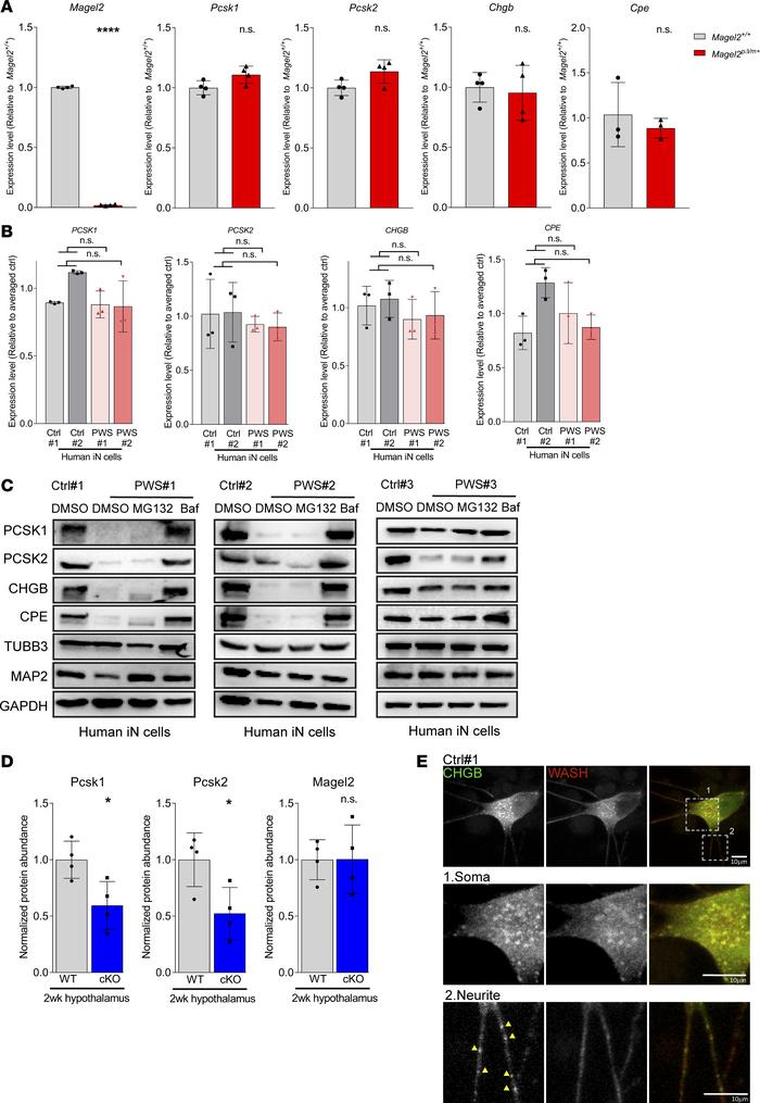 WASH-mediated protein trafficking prevents lysosomal degradation of SG p...
