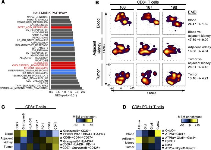 RCC CD8+ TILs differentially express costimulatory, checkpoint inhibitor...