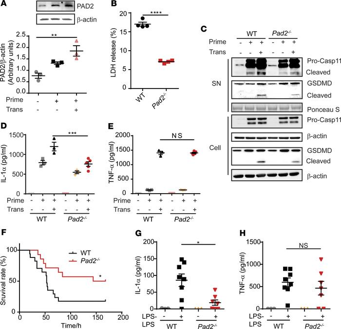 Absence of the Pad2 gene inhibits Caspase-11–dependent noncanonical pyro...