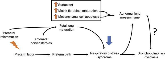 Fetal lung maturity steroids anavar steroids reddit