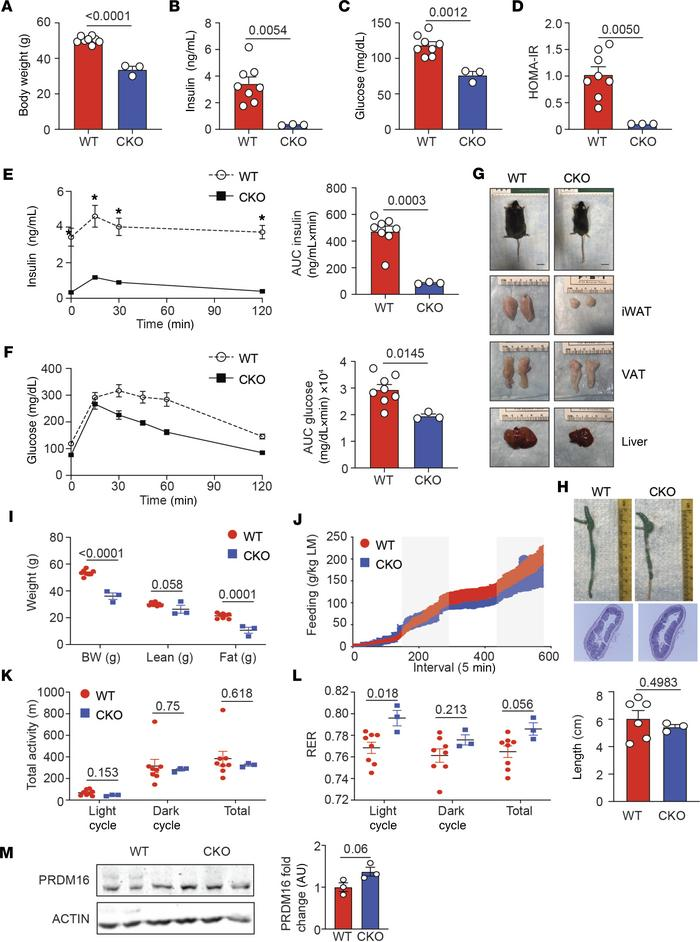 Loss of IL-10 expression by Tregs protects mice from DIO. Male Foxp3-YFP...
