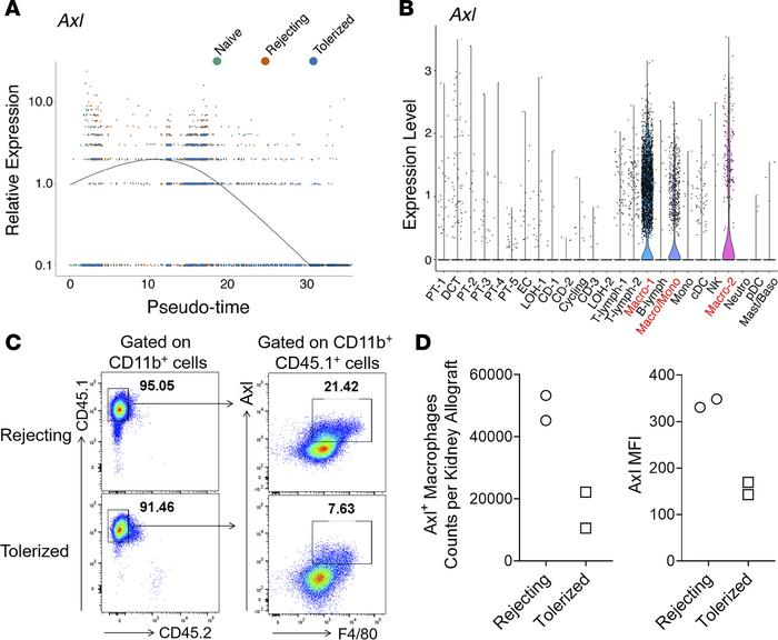 Axl is differentially expressed by graft-infiltrating macrophages in re...