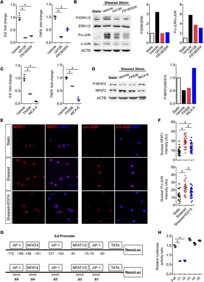 CPB conditions upregulate IL8 and TNFA via MEK/ERK/AP-1 and CaN/NFAT pat...
