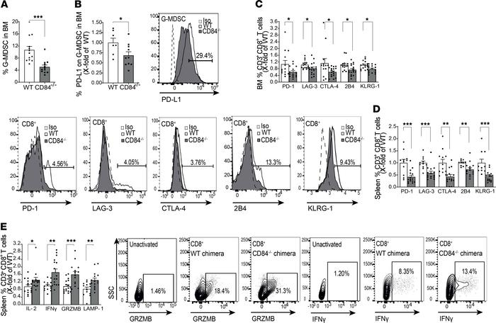 G-MDSC expansion and suppression in vivo is dependent on CD84. (A–E) WT ...