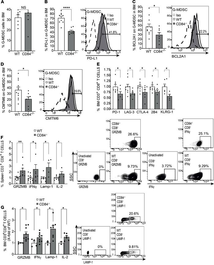 Loss of CD84 reduces G-MDSC expansion and T cell suppression. CD84–/– mi...