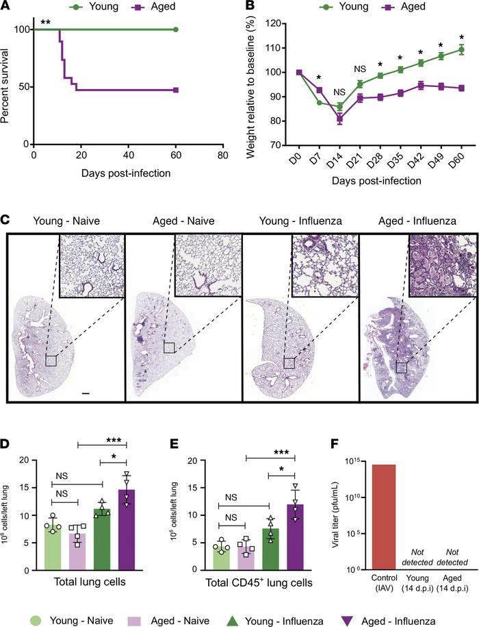 Aged mice demonstrate increased mortality and lung inflammation during r...