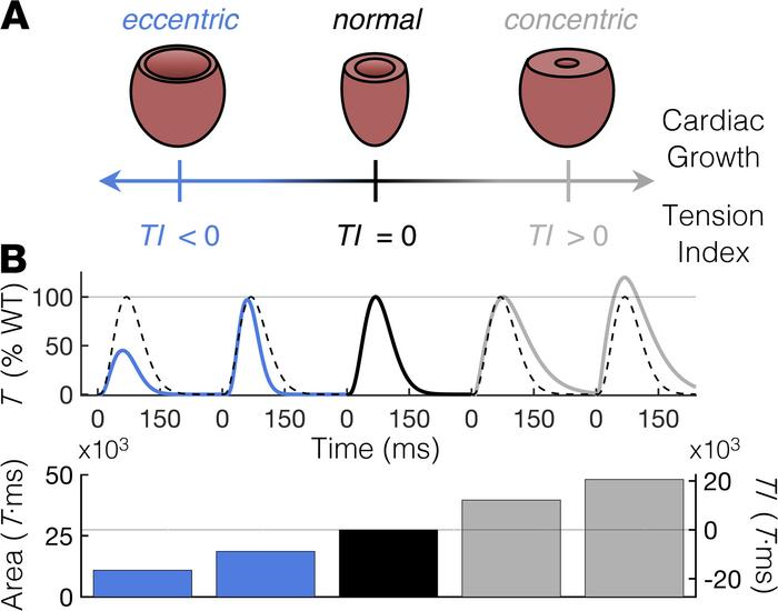 A TI based on cardiac twitch T-time integrals correlates with the type a...