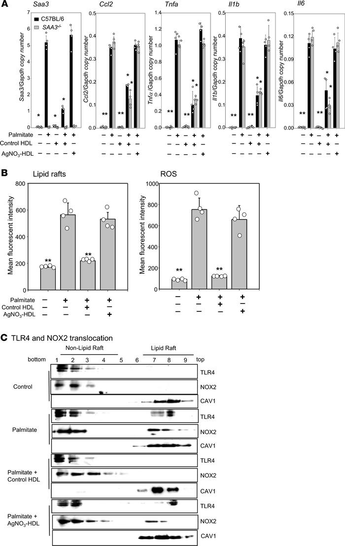 HDL from AgNO3-injected mice loses its ability to inhibit palmitate-indu...