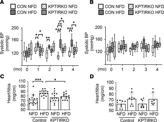 HFD-induced hypertension and heart hypertrophy are mitigated in KPTIRKO ...