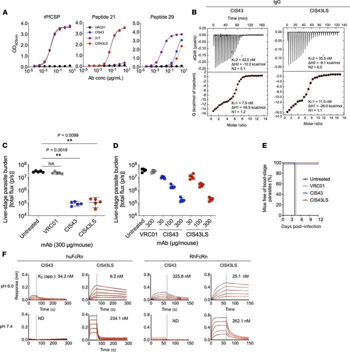 Characterization of CIS43LS. (A) Binding of CIS43LS to rPfCSP and PfCSP ...