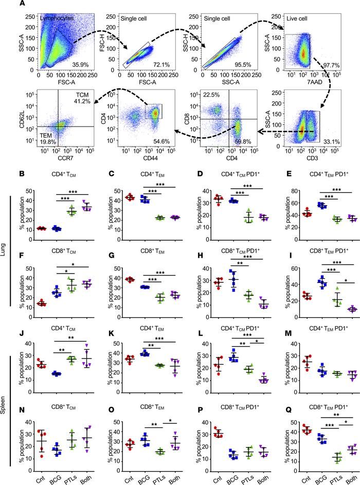 PTL induces superior antigen-specific T cell memory responses in the lun...