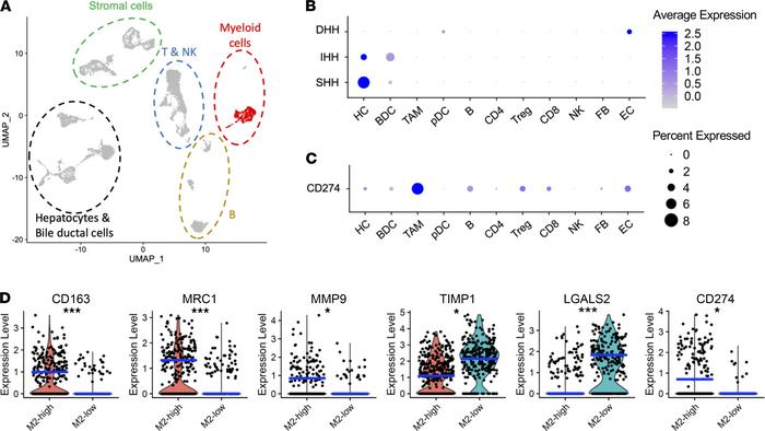 Human HCC scRNA sequencing revealed expression of PD-L1 by M2 TAMs. (A) ...