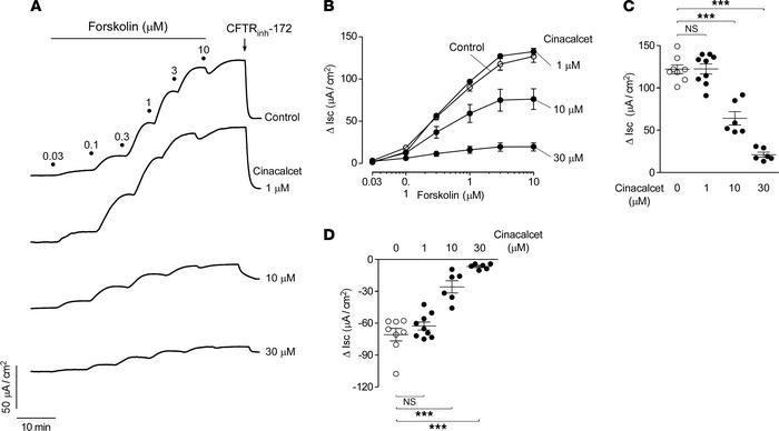 Cinacalcet inhibits forskolin-induced Cl– secretion in T84 cells. (A) Sh...