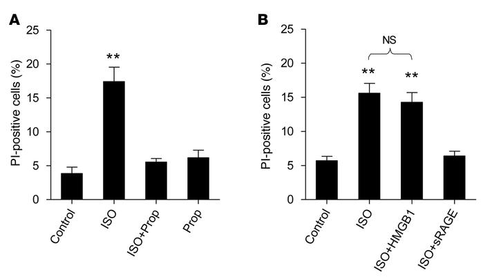 β1AR stimulation elicits cardiomyocyte death via a RAGE-dependent mechan...