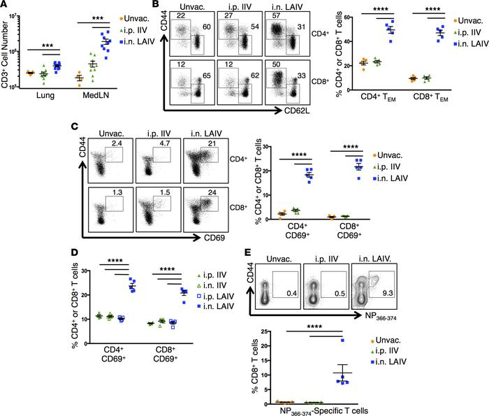 Distinct localization of primary T cell responses following vaccination ...