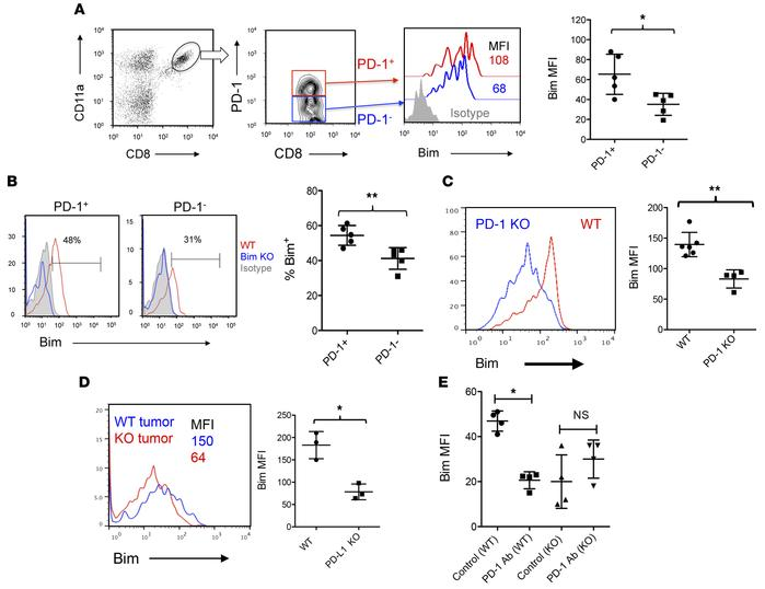 Bim upregulation in tumor-reactive CD8+ T cells is dependent on PD-1 and...