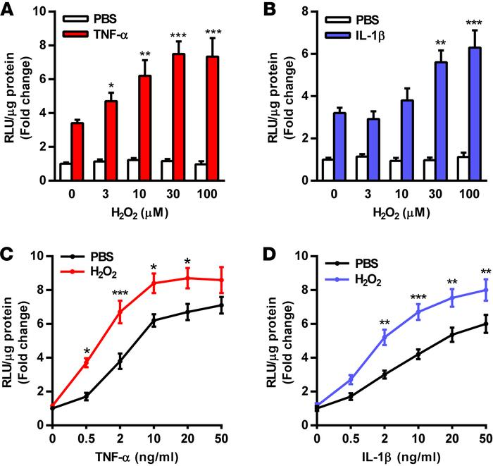 Activation of NF-κB is potentiated by H2O2 in endothelial cells. HUVECs ...