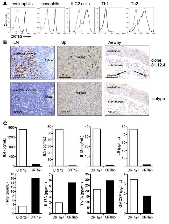 CRTh2 is expressed on human type-2 immune cells and CRTh2+ memory CD4+ T...