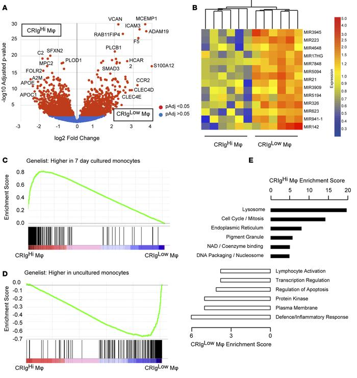 Transcriptional profiling of ascites macrophages by RNA sequencing. (A) ...