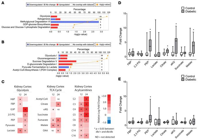 Transcriptomic and metabolomic analyses from control and diabetic mice. ...