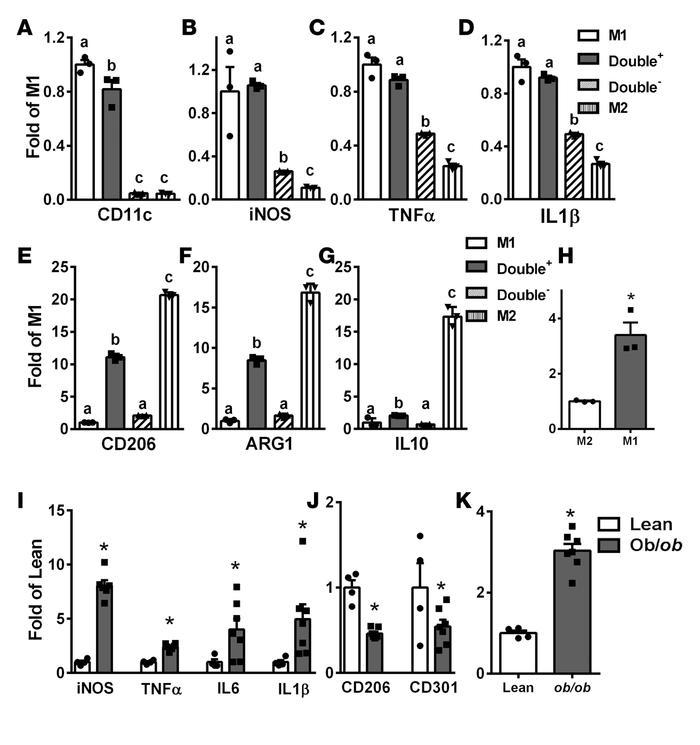 DNA methyltransferase 1 (DNMT1) expression is lower in M2 than in M1 adi...