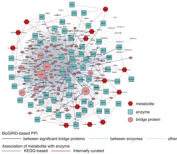 Metabolite protein-protein interaction network (MetBridgeDKD) connecting...