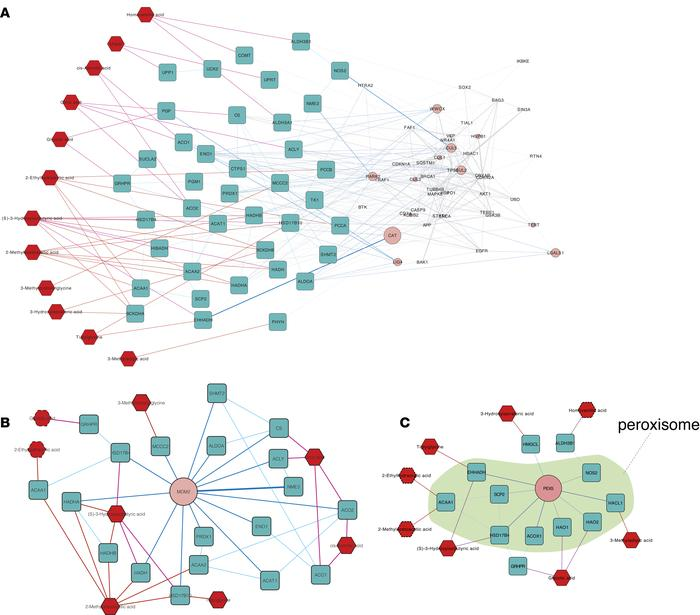 Subnetworks connecting part of 13 metabolites significantly decreased in...