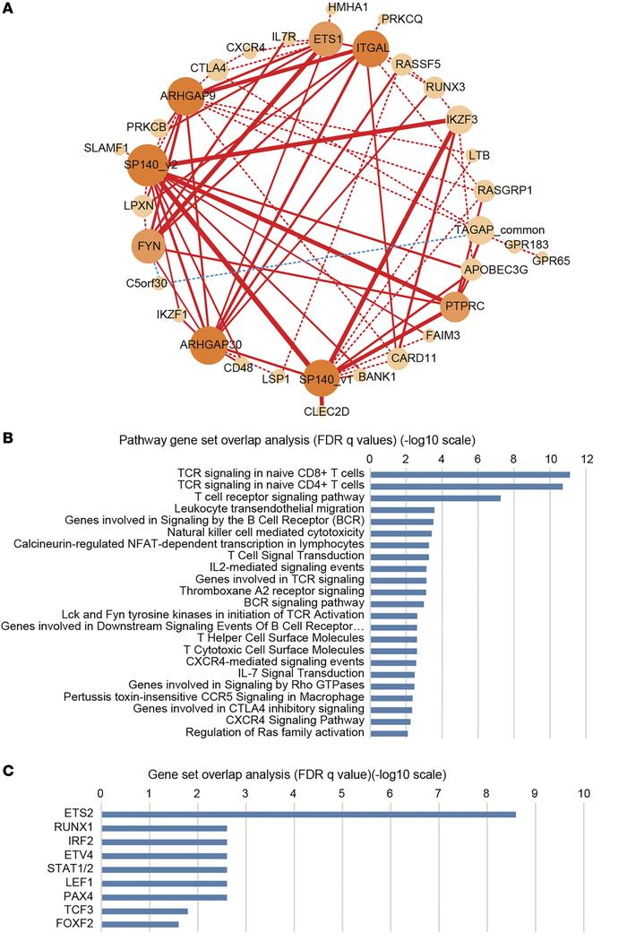 Network of correlated hub genes conserved across distinct data groups. (...