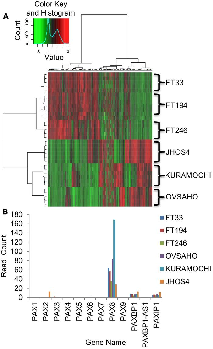 Impact of PAX8 knockdown on cell line transcriptomes. Benign fallopian t...