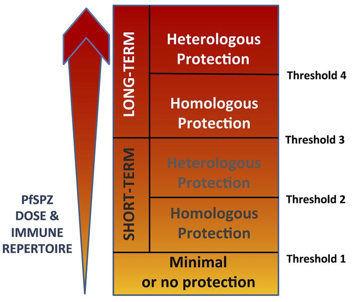 Threshold hypothesis regarding achieving >80% protective efficacy wit...