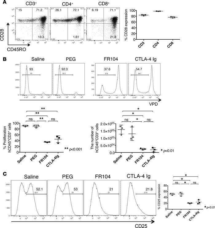 FR104 and CTLA4-Ig inhibit human T cell proliferation in vivo. Fluoresce...