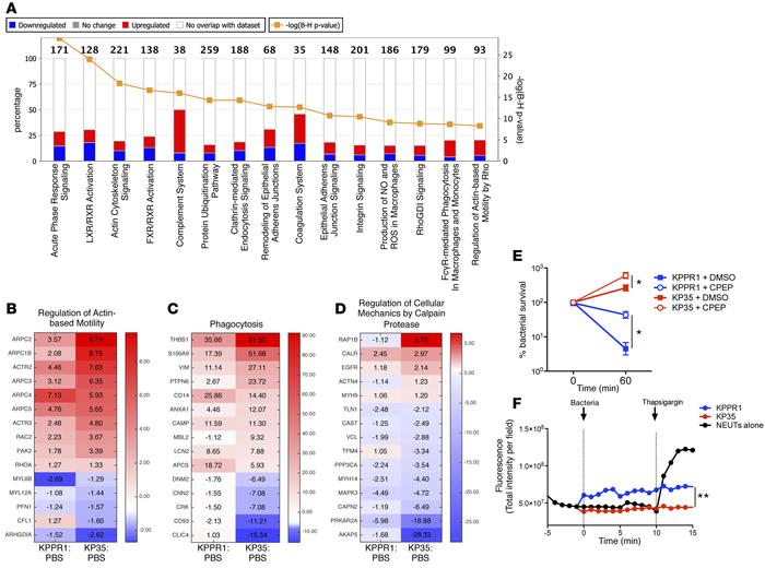 Global changes in host signaling induced by KP35 and KPPR1. (A) The majo...