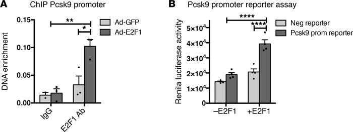 E2F1 binds and transactivates Pcsk9 promoter activity. (A) E2F1 ChIP on ...