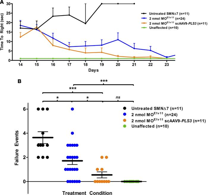 AAV9-PLS3 improves motor function in SMNΔ7 mice treated with 2 nmol MOE1...